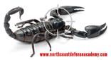 NCDA Scorpion